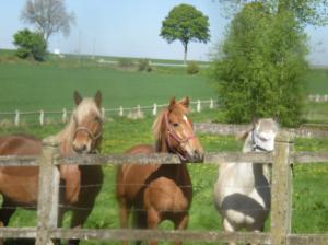 chevaux guillemins